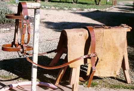 DRAUGHT BREAKING IN BRIDLE / ROLLER / CRUPPER / SIDE REINS