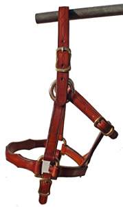 Draught Stallion Headstall - Show